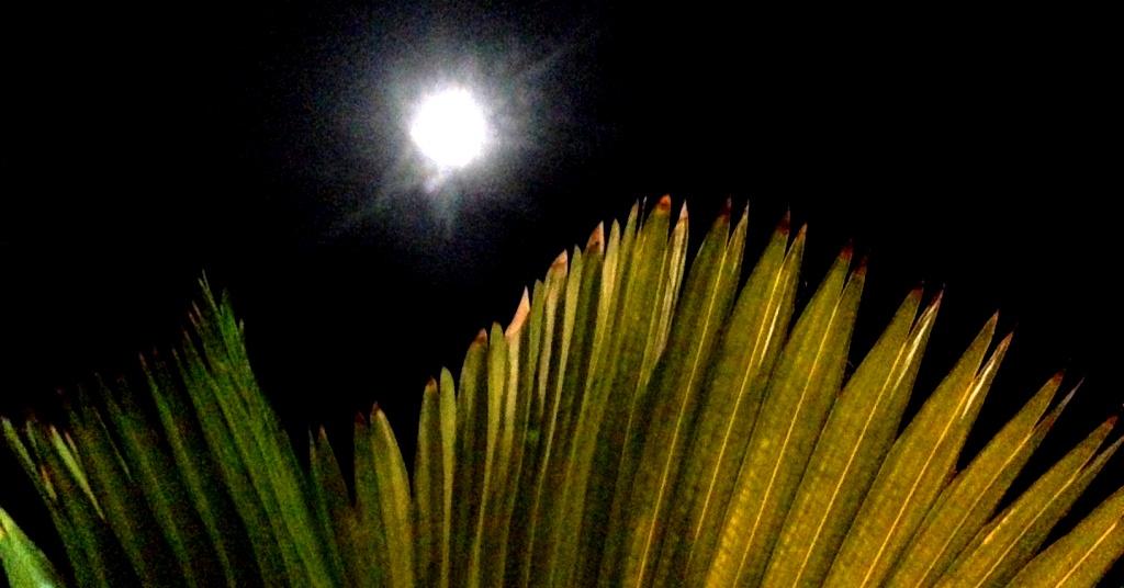 Borneo Mond