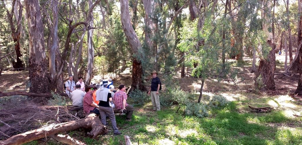 Coopzeitung Australien 2014 I_Eukalyptus
