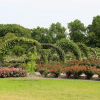 cotravel UNTERWEGS_Australien Oktober 2014_Adelaide Botanischer Garten