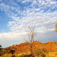 cotravel UNTERWEGS_Australien Oktober 2014_Alice Springs Kings Kanyon