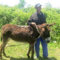cotravel Blog ALBANIEN Reise Mai 2015_Bauer Esel