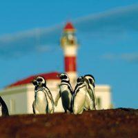 cotravel ARTIKEL_Vorfreude auf Patagonien & Feuerland_Ulrich Achermann