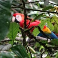 ecuador-amazonas-blog-cotravel