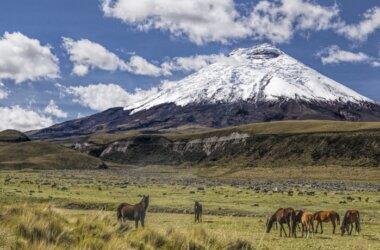 Studienreise-Cotopaxi Vulkan-Ecuador