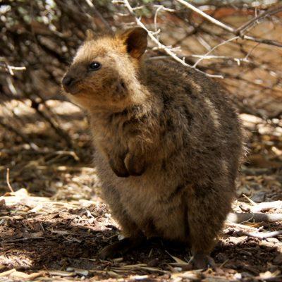 Australien-2015-056