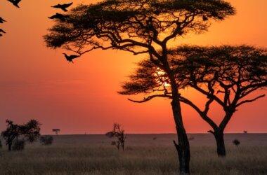 Studienreise-Serengeti Park-Tansania