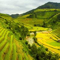 Studienreise-Teeroute-Nordvietnam