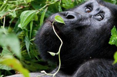 haenni-daniel-uganda